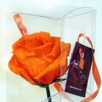 ORANGE PRESERVED ROSE IN A BOX