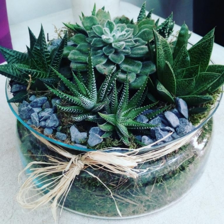 Composicion cactus