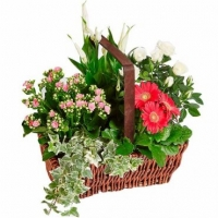 PLANTS ARRANGEMENT IN BASKET
