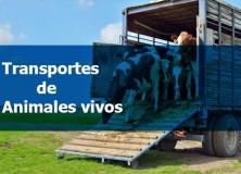 curso transporte de animales vivos autoescuela tajo talavera