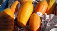 Papaya contaminada: Detenida en frontera hasta demostrar estar libre de salmonela