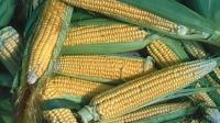 Cargill construirá planta de edulcorantes en Brasil