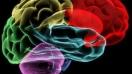 Los productos probióticos contribuyen a la buena salud del cerebro