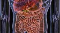 Los probióticos afectan el metabolismo