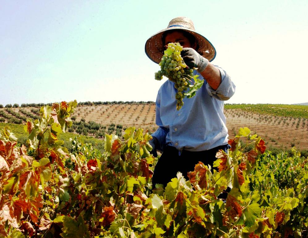 La vendimia en Montilla-Moriles