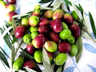 Cuáles son las variedades de olivo que predominan en esta zona de Montilla-Moriles
