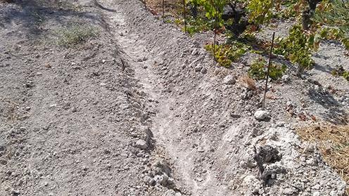 3 Formas de retener el agua en tu viña y evitar la erosion