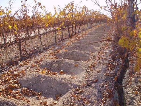 4 formas de retener el agua y evitar la erosion en viñas de espaldera
