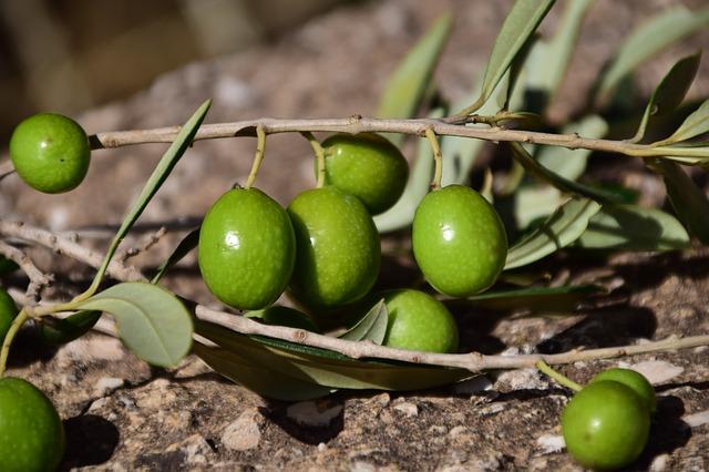 Aporta ventajas al agricultor tener una Explotacion Ecologica