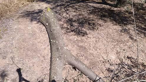 Que es la palomilla del olivo y que daños provoca