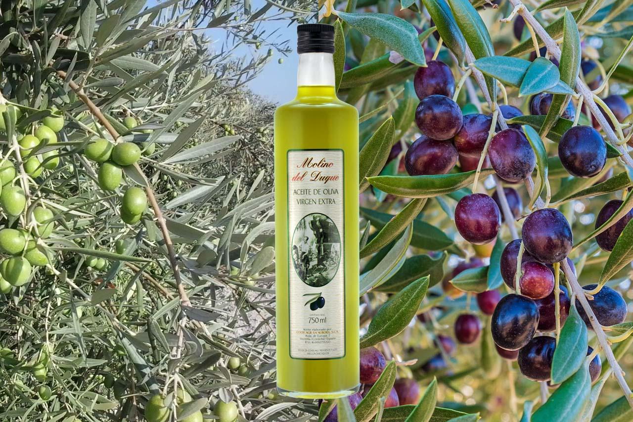 comprar aceite de oliva en cordoba