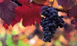 Vinos montilla