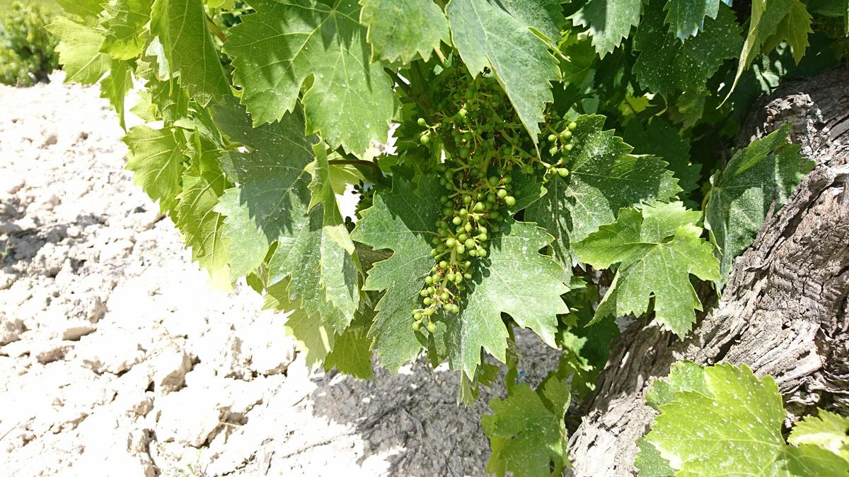 El mayo cordobés, entre viñas y olivares las flores se transforman 2