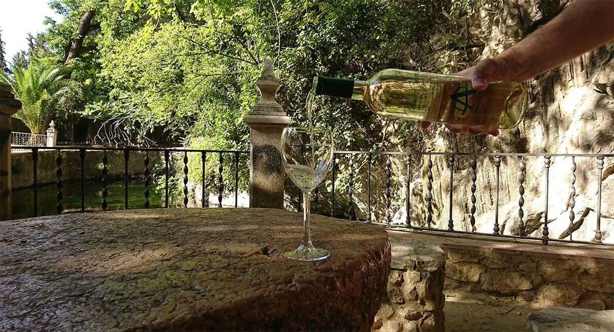 Con A de Alegría, presentamos nuestro nuevo Sauvignon Blanc 2