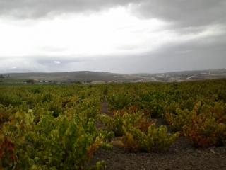 Llegan las primeras lluvias a Montilla-Moriles