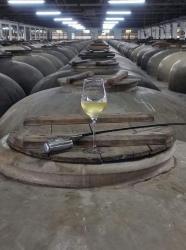 El trabajo de todo un año, a la venta nuestro Vino en Rama Cosecha 2021