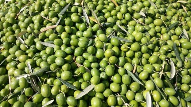5 ventajas del verdeo de la aceituna
