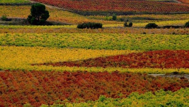 Los colores del otoño llegan a Santa Elena