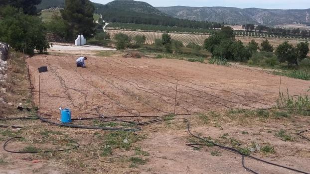 La Finca Santa Elena amplia su cultivo ecológico con un huerto