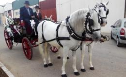 Paseos en carruajes de caballos