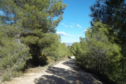 El Camino del Alba, una experiencia de peregrinación en plena Vall d'Albaida