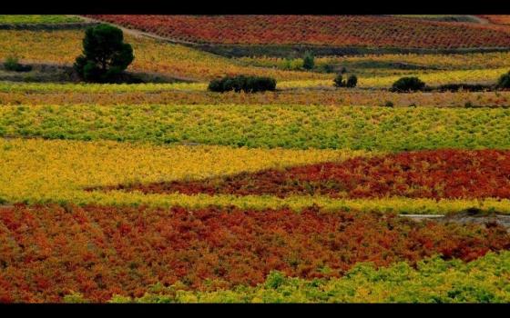Toscana Valenciana