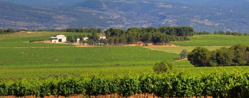 Bodegas Los Frailes: el carácter de una tierra virgen entregada al vino
