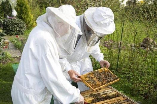 La apicultura: mil secretos de la miel por descubrir
