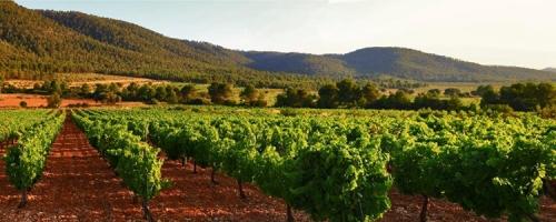 """""""Los Pinos"""": la ecología del buen vino valenciano"""