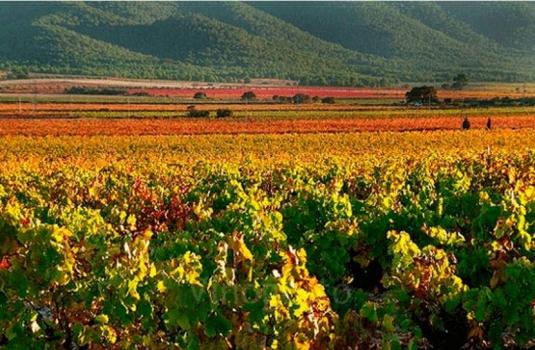Explorando las viñas en la Vall d'Albaida