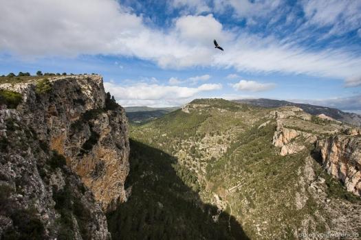 Flora y fauna en la tierra de la Finca San Agustín