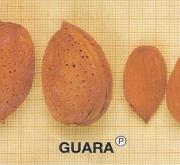 ALMENDRO GUARA