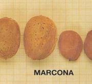 ALMENDRO MARCONA