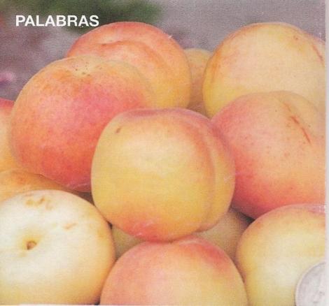 ALBARICOQUERO PALABRAS