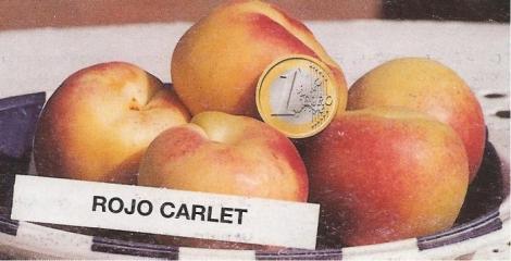 ALBARICOQUERO ROJO DE CARLET
