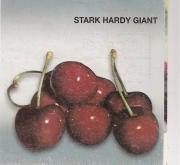 CEREZO STARK HARDY GIANT