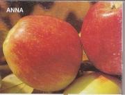 MANZANO ANNA