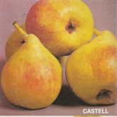 PERAL CASTELL (Nº 1)