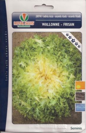 ESCAROLA RIZADA - WALLONNE FRISAN (Cerca de 1,5 gr.).
