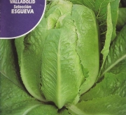 LECHUGA VALLADOLID Sel. ESGUEVA Pildorada (50...