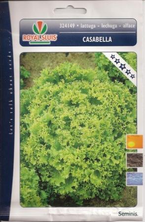 LECHUGA CASABELLA (Cerca de 1500 Semillas)