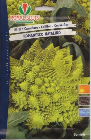 ROMANESCO NATALINO (Cerca de 1500 Semillas).