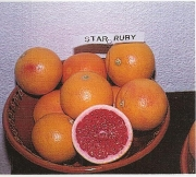 POMELO STAR RUBY - 25