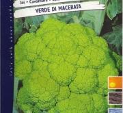 COLIFLOR VERDE DE MACERATA (Cerca de 6 gr.).
