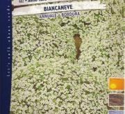 ALISO ENANO BIANCANEVE - BLANCANIEVES