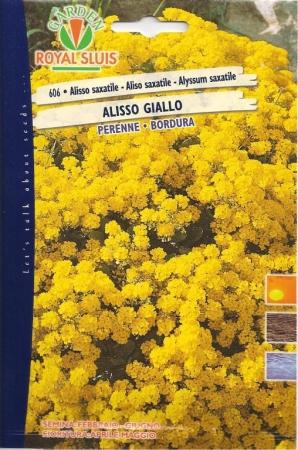 ALISO SAXATILE - CANASTILLO - CESTILLO DE ORO