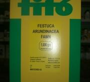FESTUCA ARUNDINACEA FAWN NT