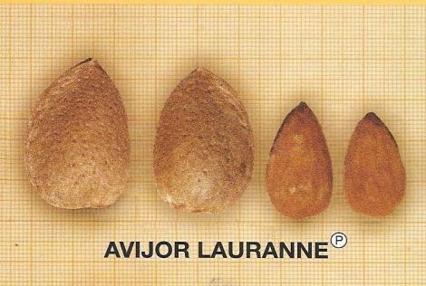 ALMENDRO LAURANNE (Avijor) ®