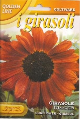 GIRASOL EVENING SUN