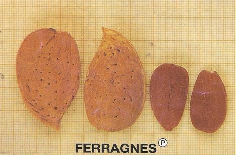 ALMENDRO FERRAGNES ®